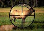 С сегодняшнего дня браконьерам грозит не только штраф