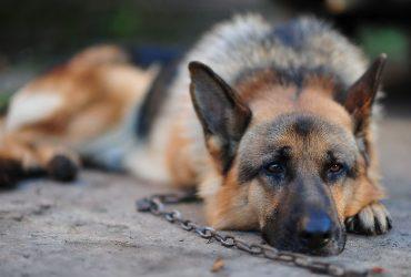 За избиение собаки житель Франции отсидит 6 месяцев