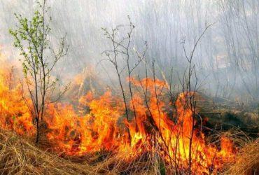 Мужчина из Греции устроил 16 поджогов, чтобы помогать пожарным их тушить