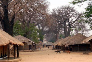 В Африканском государстве нашествие «вампиров»