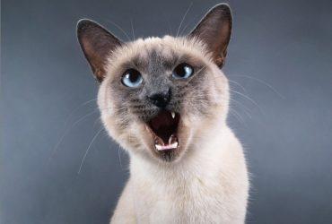 Женщина подала в суд на бывшего мужа из-за кошки