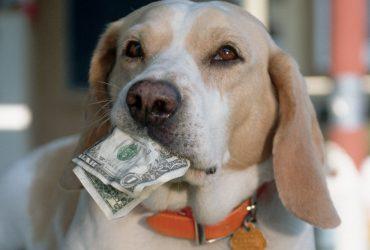 Молдаване будут платить налог «на собак»