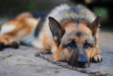 Мужчине грозит пожизненное заключение из-за смерти 30 собак