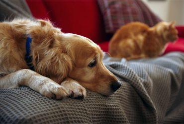 Одно животное в одной семье: в Молдове ограничат число домашних питомцев