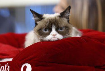 Первый в истории суд над «мемом»: хозяйка кошки получит почти $1 млн компенсации