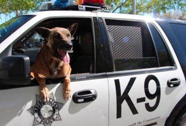 Подозреваемый укусил полицейскую собаку при задержании: теперь его срок увеличится