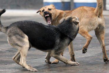 В Дагестане собаки загрызли насмерть 4-летнего мальчика