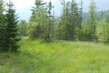 Во Львовской области лесник подделал документы на землю. Убытки составляют 16 млн гривен