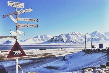 В норвежском городе людям запрещено умирать и заводить котов