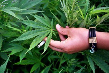 В Сан-Франциско «простят» все правонарушения за 40 лет, связанные с марихуаной
