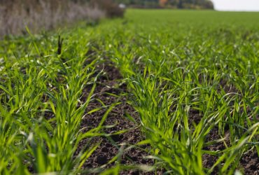 На фермера подали в суд за то, что он посеял зерновые культуры