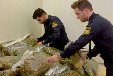 Полицейские выступили за полную легализацию марихуаны